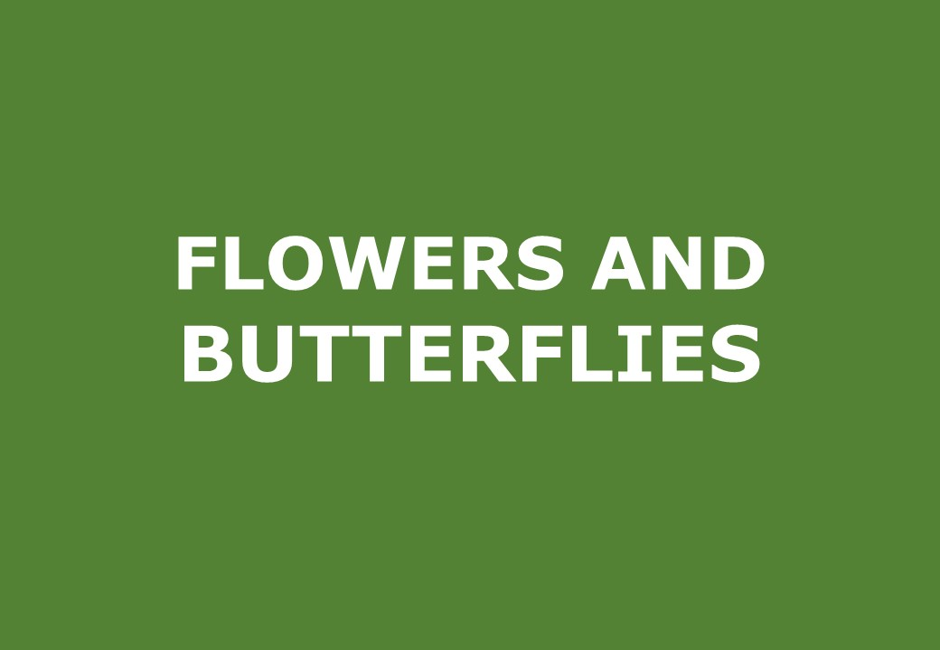 Flowers and butterflies activities