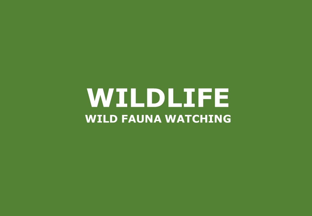Wildlife activities