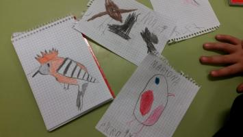Dibuixos de l'activitat d'ocells